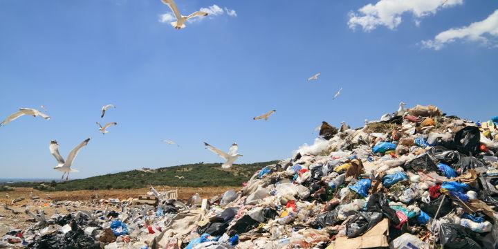 Seagulls flying over landfill
